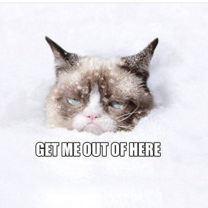 Snow-NO - Grumpy Cat Picture