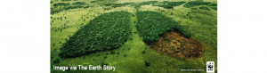 people have long referred to trees as the earth s lungs but this ...