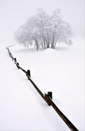 untouched snow, beautiful winter scene |