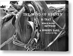 carriage-horse-quote-jamart-photography.jpg