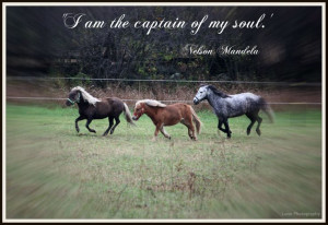 Inspirational Horse Quote