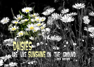 Daisies Quote Photograph
