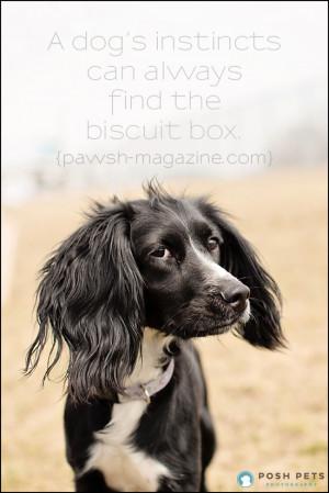 Toronto-dog-photographer-dog-quote-14