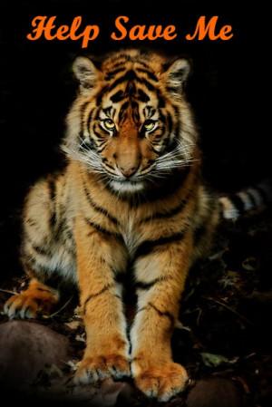 Help save me, Tiger cub
