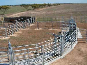 horse and cattle yards 7 images