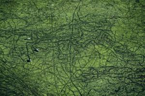 ... Yann Arthusbertrand, Yann Arthus Bertrand, Aerial Photos, Yannarthus