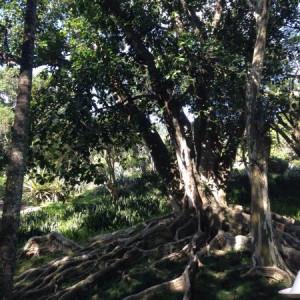 photo2 jpg Picture of Sitio Roberto Burle Marx Rio de Janeiro