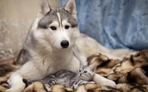 Dog Cat Kitten Lie | 2560 x 1600 | Download | Close