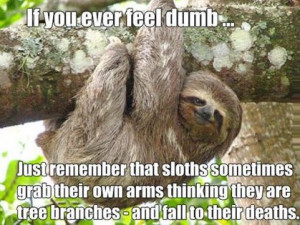 animals animals funny pics funny pictures humor lol sloth leave a ...