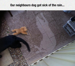 funny-dog-rain-water-shadow
