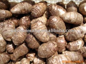2011_fresh_vegetable_taro_120g.jpg