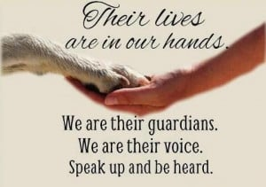 Stop animal abuse and neglect.