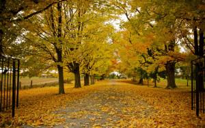 Wallpaper Fall Trees Leaves