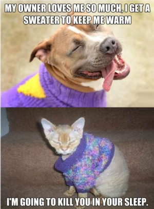 funny-picture-cat-dog-sweater