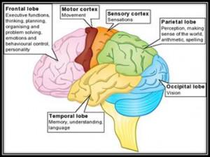 Life After Trauma & Brain Injury?