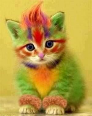 صورة قطة قوس قزح,,,