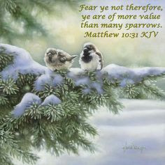 ... Praise God, Heavens Fathers, Bible Verses, James Bible, Kjv Bible Bird
