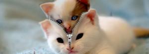 Spy-Kitty-Facebook-Profile-Timeline-Cover.jpg