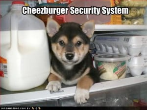 German Shepherd Quotes photo cute-puppy-pictures-dog-is-a-cheese.jpg