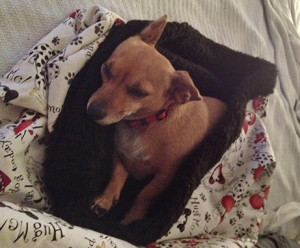 Cute puppy pocket snuggly comfy bed!