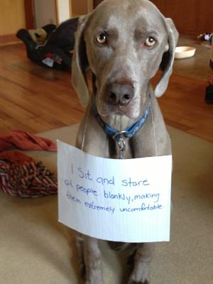 Funny Dog Shaming Joke Pictures