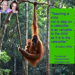 rainforest-quote.jpg