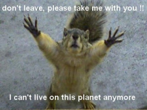 funny squirrel picture funny squirrel picture