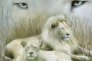 ... Unseen Rare white Lion Desktop Wallpaper,Beautiful white Lion Photos