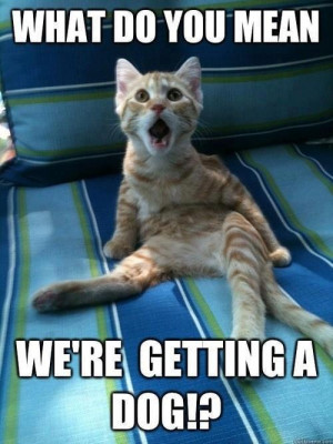... : Funny Animals // Tags: Funny cat - What do you mean // April, 2013