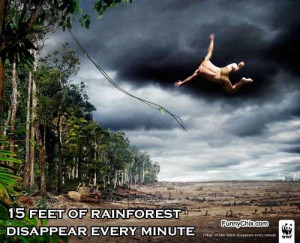 best new funny pictures disappearing rainforest