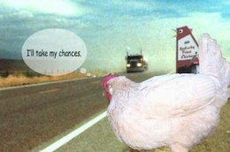 Chicken quotes, sayings, fun facts and trivia