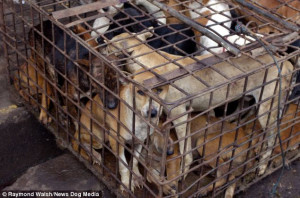 ... , rats, bats and monkeys among the animals roasted WHOLE in Indonesia