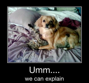 Funny Cat and Dog Memes