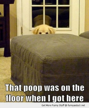 poop already there dog hiding animal funny pics pictures pic picture ...