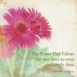 pink-daisies-flower-quote