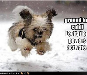 cute dog photos with sayings - Google Search