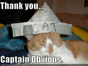 Cat quotes | Funny Cats Pictures