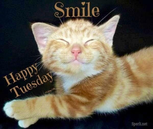 10 Cute Happy Tuesday Quotes For Facebook