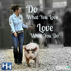 livestock quotes pixel pigs show quotes show pigs quotes pigs ...