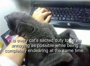 Every cat's sacred duty.. :)