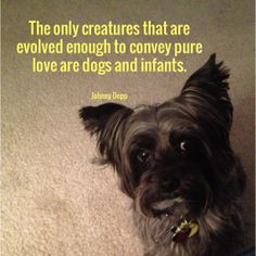 Furry friends quote. #dogs #furry #friends #animals #animalquotes # ...