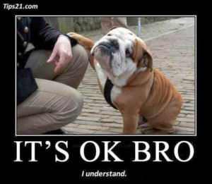 ... funny dogs and cats quotes,funny dogs at work,funny dogs and puppies