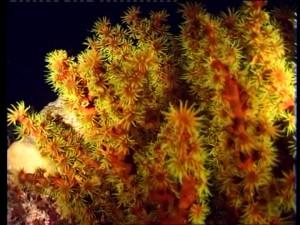 ocean plant names
