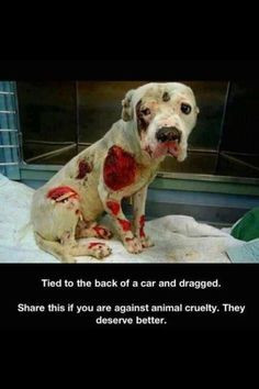 This poor dog was tied to he back of a car and dragged no offense but ...