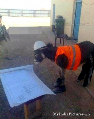Donkey Contractor Civil Engineer Funny