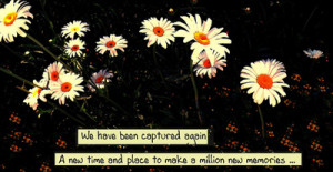 image quotes typography sayings daisies captured million memories ...
