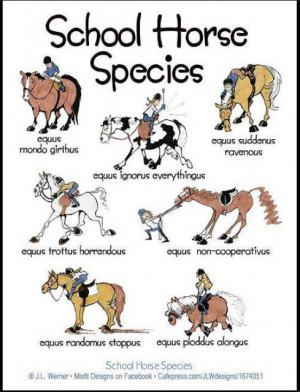 """Horses are predictably unpredictable"""" - Loretta Gage"""