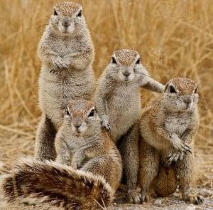Funny Squirrel (58)