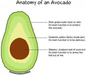 funny-avocado-anatomy