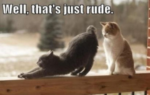 Cat-Humor-Bengal-Cat-Jokes~~element51.jpg